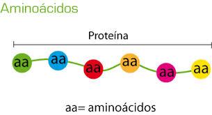 cadena proteina